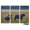 Rhinos 3