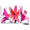 Pink Lillies Floral