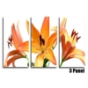 Orange Lillies Floral