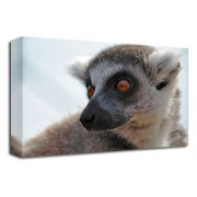 Lemur Canvas Art Print