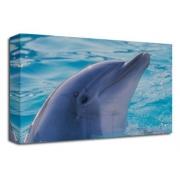 Dolphin Sealife Marine Fish