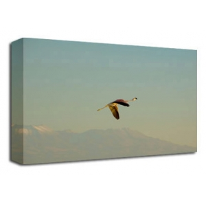 Flying Flamingo Bird