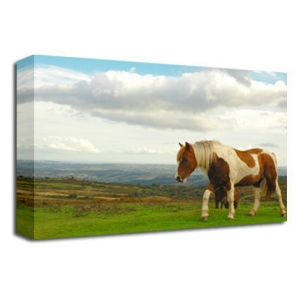 Dartmoor Pony Horse