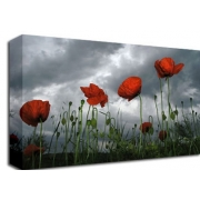 Poppy Field Storm Clouds Flora