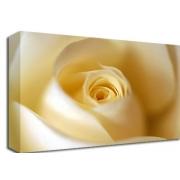 Cream Rose Floral