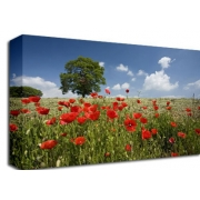 Poppy Field  with Tree Floral