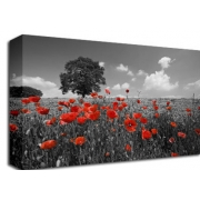 Poppy Field  with Tree B/W Floral
