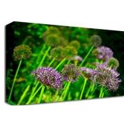 Purple Grasses Floral