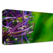 Purple Grasses with Insect Floral