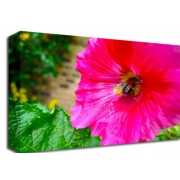 Pink Flower With Bee Floral