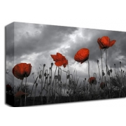 Poppy Field Storm Clouds B/W Floral