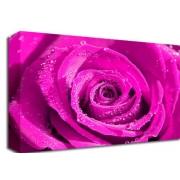 Bright Pink Rose Floral