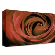 Dark Red Rose Floral