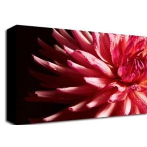 Gerbera Flower Floral