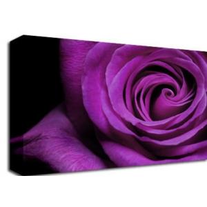 Purple Rose Floral