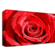 Bright Red Rose Floral