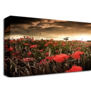 Poppy Field Storm Full Sepai Floral