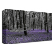 Bluebell Forest Floral (Colour Splash)