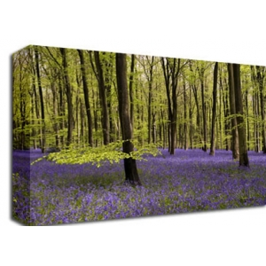Bluebell Forest Floral