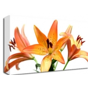 Orange Lillies Floral