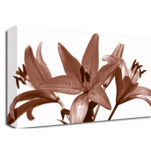 Brown Lillies Floral